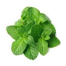 Herbal Mint Leaves UAE 1bunch