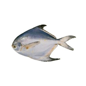 Black Pomfret Fish 500g