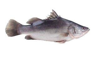 Filai Nile Perch Fish 500g