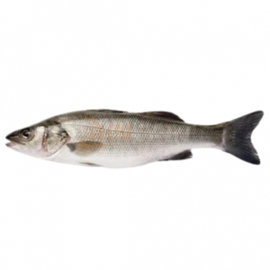 Sea Bass Turkey 500g
