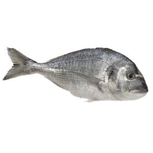 Sea Bream Tunisia 500g