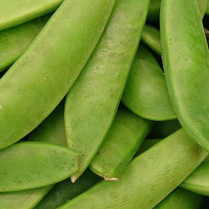 Sweet peas 01