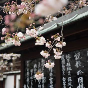 Japan emily