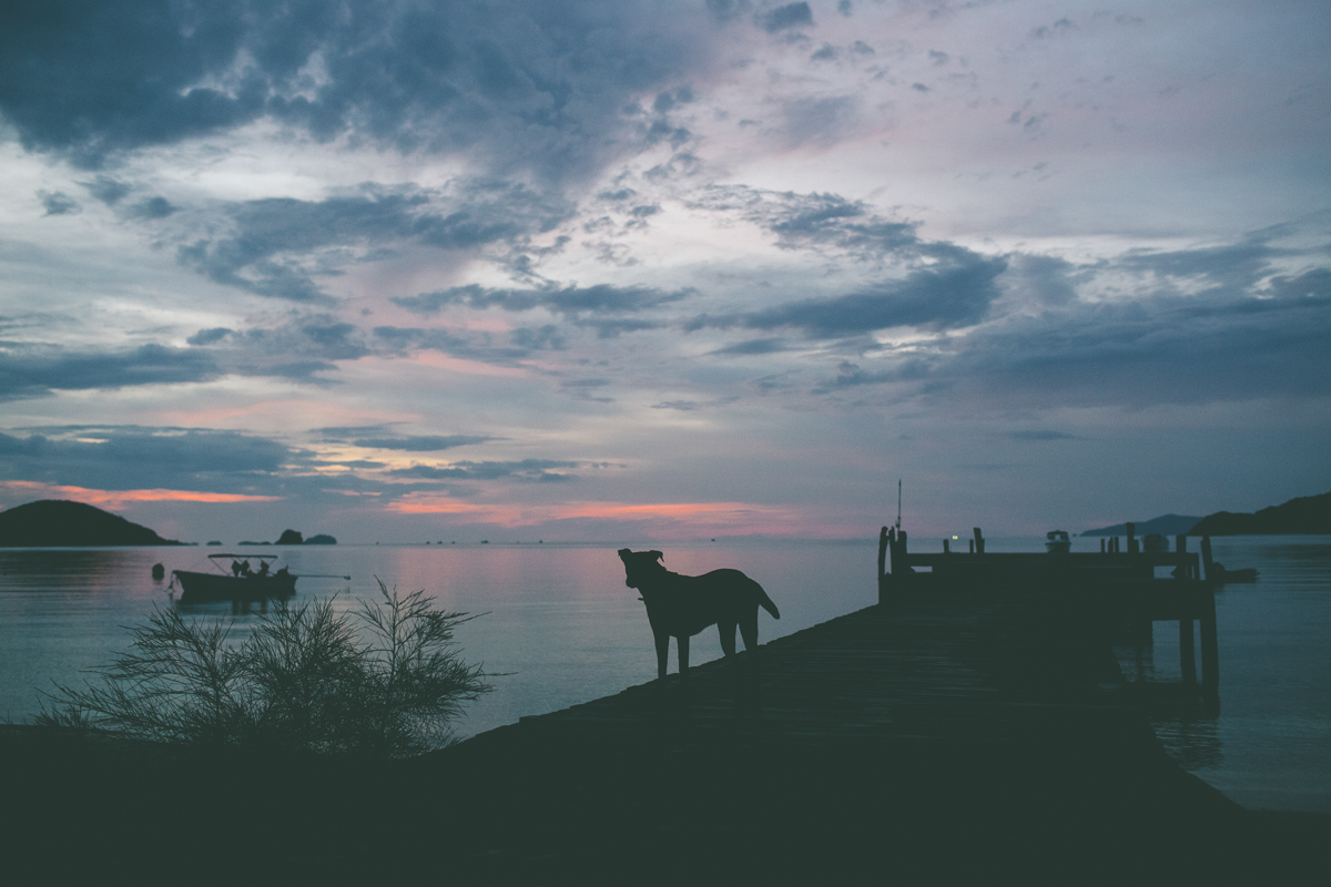 Dogs- Travel-Photography-3