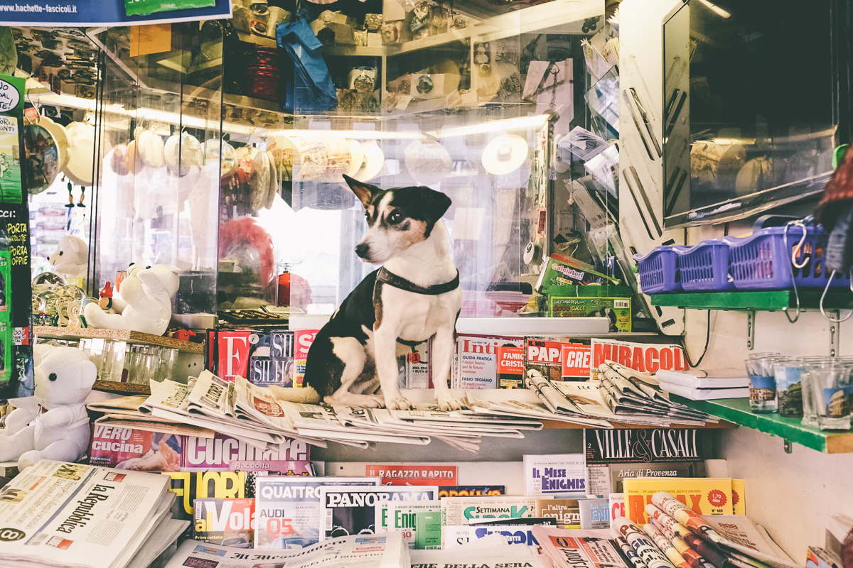 Newsstand Dog Rome