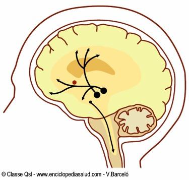 Circuitos neuronales de las vias dopaminergicas
