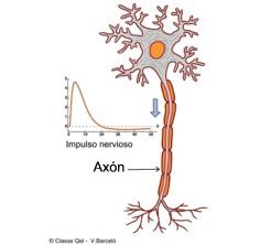 enciclopedia salud definición de axón