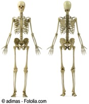 D esqueleto