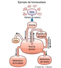 D homeostasis