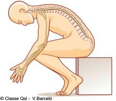 D medulaespinal