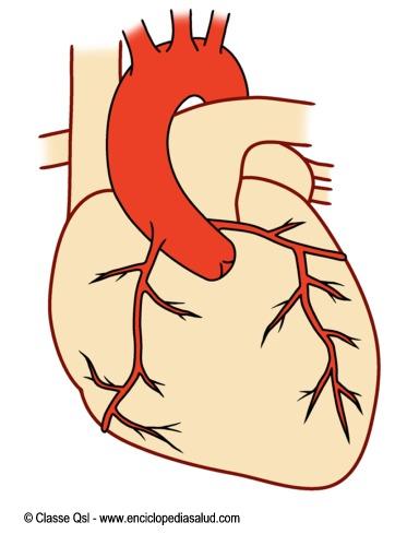 Enciclopedia Salud Dibujos del corazn en la Enciclopedia Salud