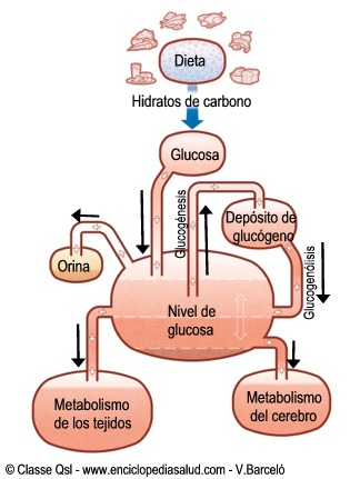 Ejemplo de homeostasis para la regulación de la concentración de glucosa en la sangre