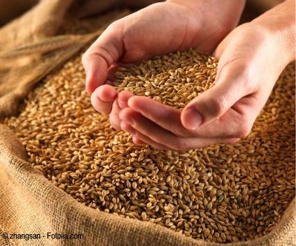 Granos de cereal, salvado