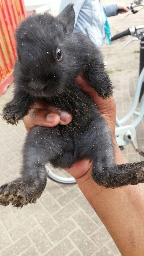 baby konijntje