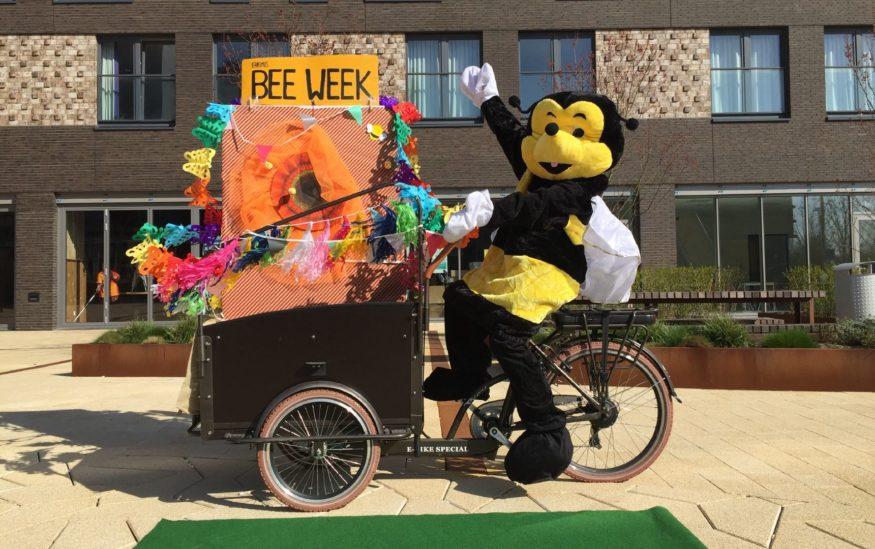 erasmus bee week