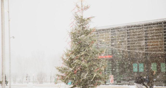 kerstboom in de sneeuwstorm campus