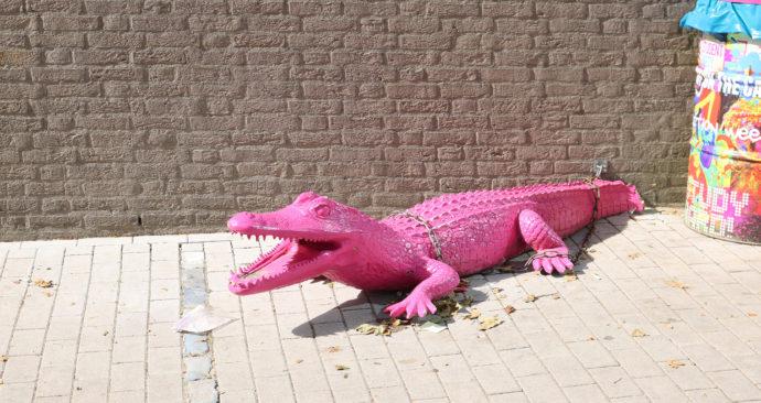 Quiz-Flora-en-fauna-Roze-krokodil