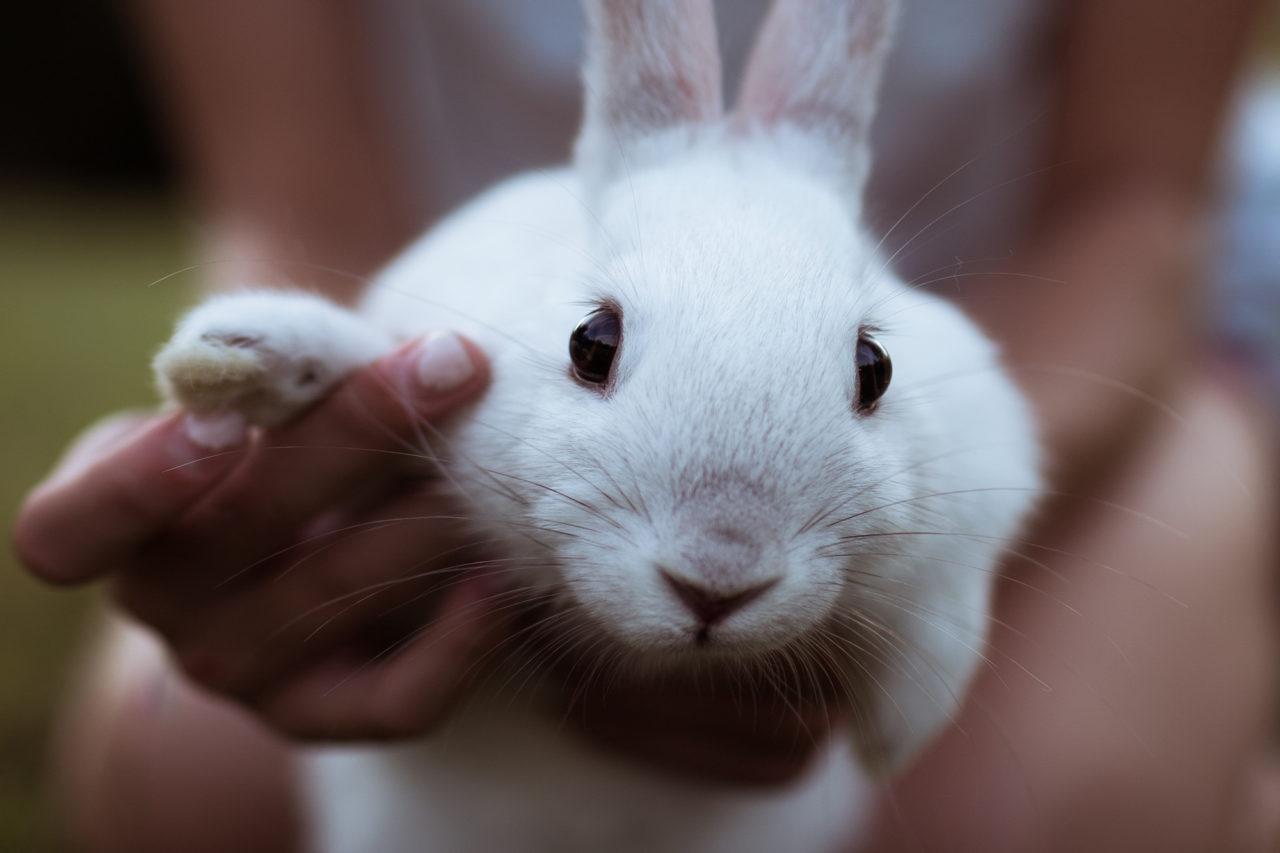 konijn dier diertesten