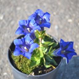 Dark Blue JP