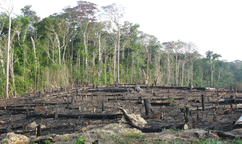 Deforestation 3