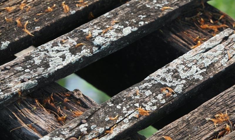 Moisture damaged wood