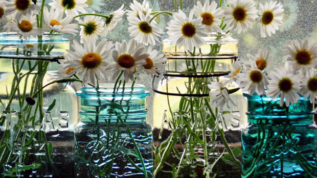 Daisies on a Window Sill