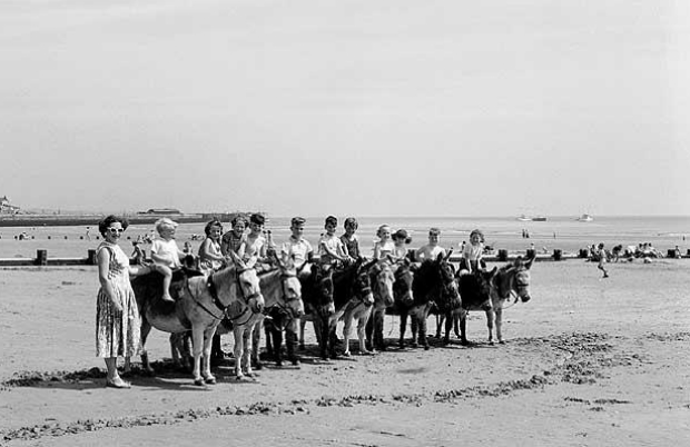 Traditional Donkey Rides, Telegraph