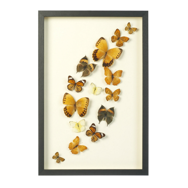 Butterfly Wall Art, Adventino £89.50