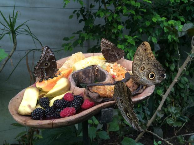 Butterfly Garden Bristol Zoo, Andrea Morgan