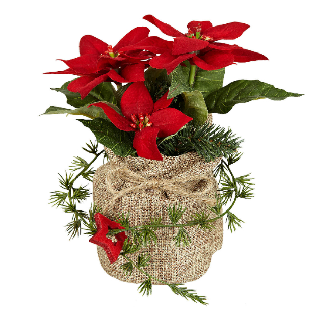 Hessian Potted Poinsettia Red, John Lewis £8.00