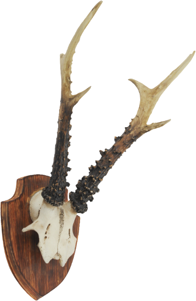 Horn On Shield Wall Hanging Plaque, Artisanti £47.00