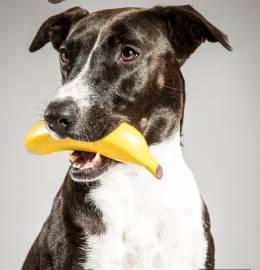 Biscoitos STREAT® 100% Naturais (DOG) - Banana com Côco (EMB L+)
