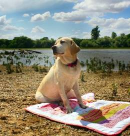 PET Blanket