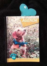 Agenda solidária 2019