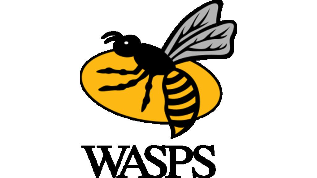 London Irish v Wasps