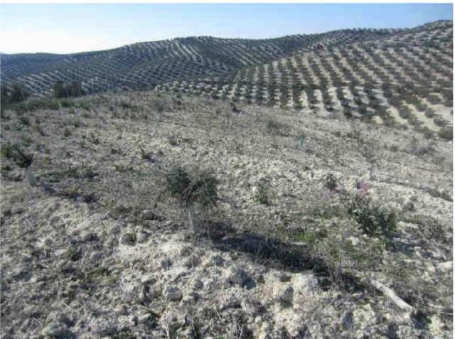 Suelo en venta en El Palomar, Aguilar de la Frontera, Córdoba, Calle Partido Castillo Anzur Y Barranquillos, 165.000 €, 125213 m2