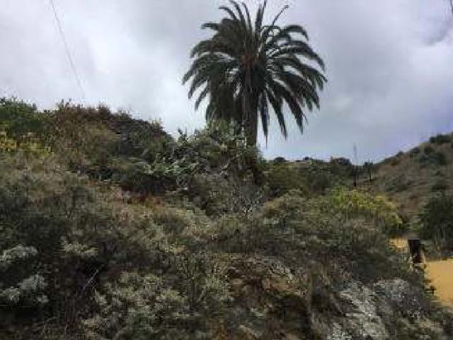 Suelo en venta en Valle Abajo, Vallehermoso, Santa Cruz de Tenerife, Paraje los Chapines, 27.000 €, 13219 m2
