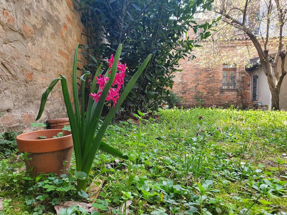 """Piccoli Alberi Da Giardino la primavera che si vede"""", condividere i giardini in fiore"""