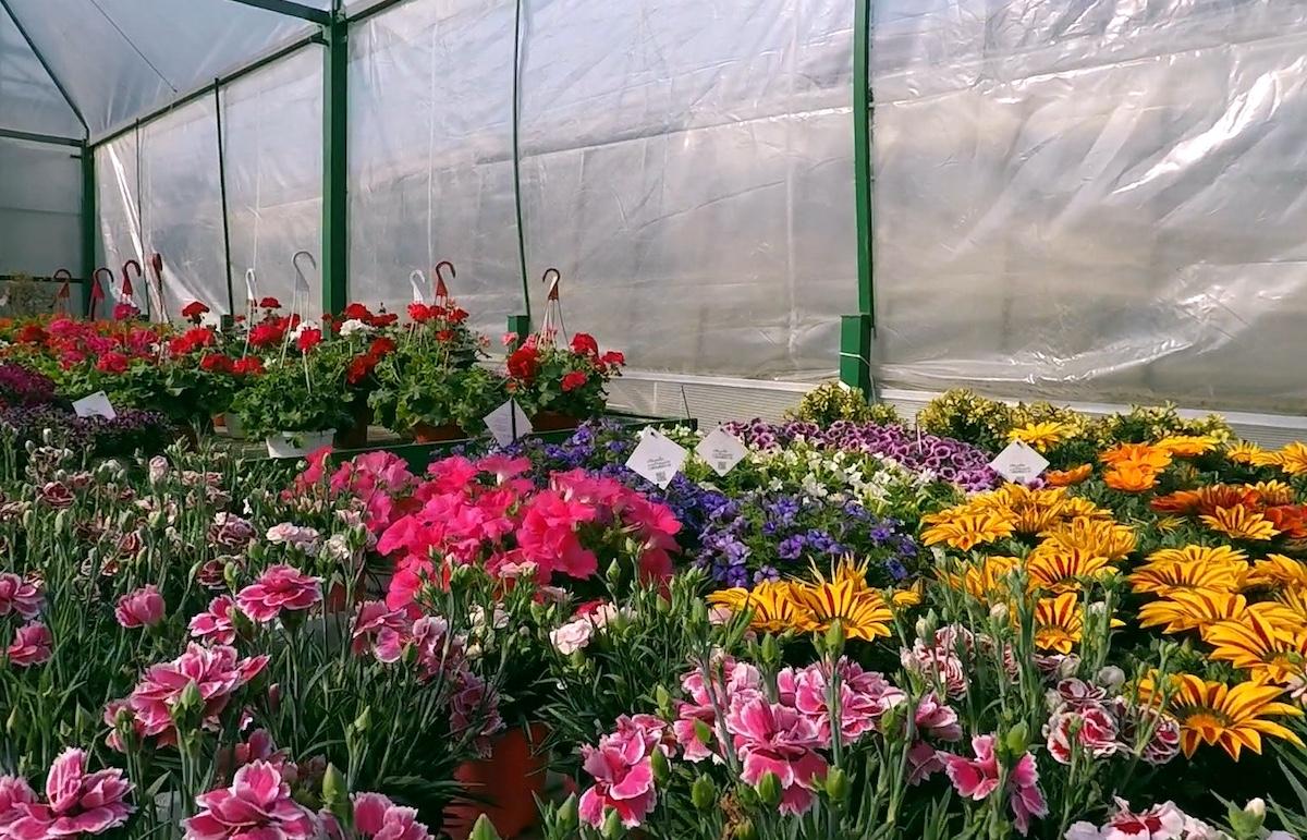Immagini Piante E Fiori autorizzata la vendita di piante e fiori   estense ferrara
