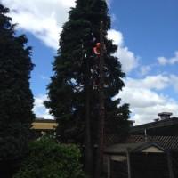 C.W.L Arborist tree care