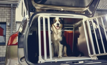 Ford puts focus on pet safety