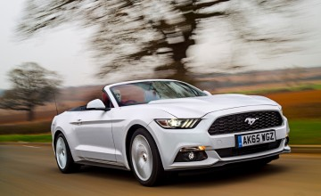 Mustang on the gallop