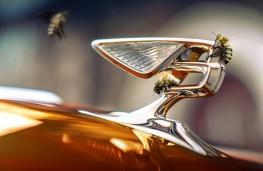 Bentley badge, 2020, Beyond100