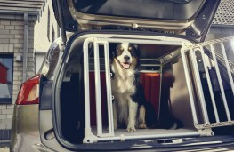 Ford Focus Estate, 2019, dog in crate