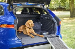 Jaguar Pet Products, 2018, range with dog