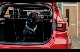 MG ZS, dog in boot