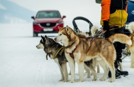 Mazda CX-5, Siberia, 2018, dogs