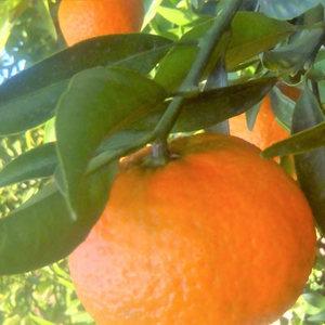 400x400 naranjas oct2017