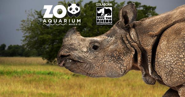 E6k zoo01 web 600x316