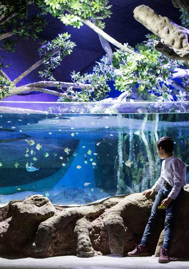 Euro6000 300x425 aquariosevilla